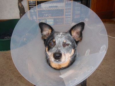 ... or the satellite dish dog.